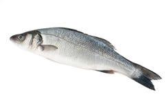 Sea bass isolated Stock Photo