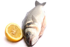 Sea bass isolated on white background with lemon Stock Photography