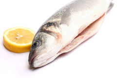 Sea bass isolated on white background with lemon Royalty Free Stock Photography