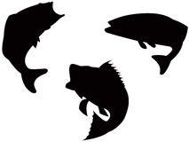 Sea Bass jumping stock illustration
