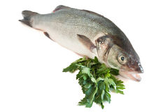 Sea bass with parsley Stock Photography