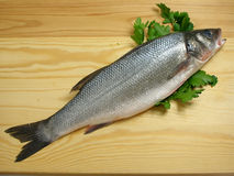 Sea bass with parsley. Sea bass on the cutting board with parsley royalty free stock photography