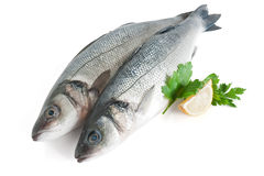 Sea bass with parsley and lemon. Two sea bass with lemon and parsley isolated on white background with clipping path Stock Images