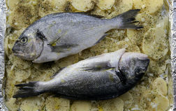 Sea Bass, potatoes and spices stock photography
