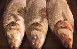 Sea bass prepared. And ready to be cooked Royalty Free Stock Photos