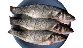 Sea bass raw Stock Images