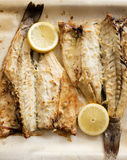 Sea bass recipe Stock Photography
