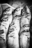 Sea Bass for sale  Stock Image