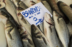 Sea Bass. For sale at the fish market in Udine Italy Royalty Free Stock Images