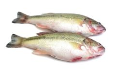 Sea bass. Isolated with white background royalty free stock images