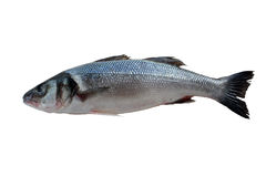 Sea bass. On the white background Royalty Free Stock Photos