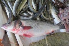 Sea bass seabass Stock Photos