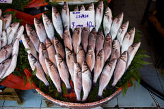 Sea Bass Stall. Fish market stall in Istanbul, Turkey with fresh sea bass fishes, price tag in Turkish Royalty Free Stock Photos