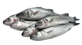 Sea bass on white. Pile of sea bass fish on white background Stock Image