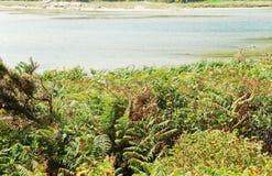 Sea bay on Cies Islands in Atlantic, Spain Stock Photography