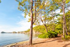 Sea bay with clear calm water in pine forest Royalty Free Stock Photography