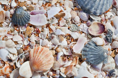 Sea beach background Royalty Free Stock Photography