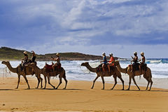 Sea Beach Camels Ride Stock Photography