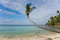 Sea and beach with coconut palm Royalty Free Stock Photos