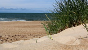 Sea, beach, and grass on sand dune. Close-up of grass is swinging in the dunes with empty beach and sea waves in the background stock video footage