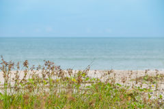 Sea beach with green grass Royalty Free Stock Photo
