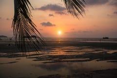 Sea beach through palm leaves during amazing Sunset. Nature. Sea beach through palm leaves during amazing Sunset Stock Image