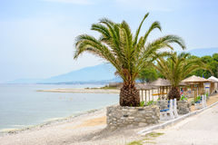 Sea beach with Palm trees. Empty Beach with Palm trees at summer, Skotina, Greece Stock Photo