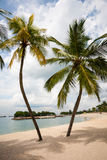 Sea beach palms on the island of Sentosa in Singapore. Stock Images