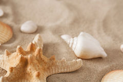 Sea beach sand and seashells background, natural seashore stones and starfish Stock Photos
