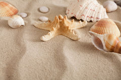 Sea beach sand and seashells background, natural seashore stones and starfish Royalty Free Stock Images