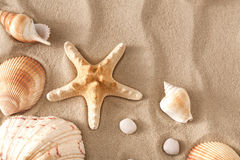 Sea beach sand and seashells background, natural seashore stones and starfish Stock Images