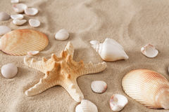 Sea beach sand and seashells background, natural seashore stones and starfish Stock Photography