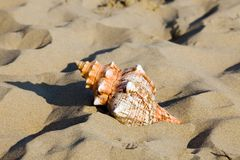 Sea and beach sand with shell Stock Image