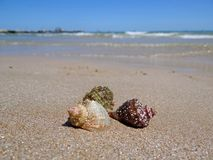 Sea beach with some rapans. Three sea-shells at the beach sand. Tourism concept background stock images