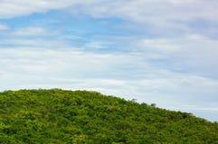 Sea beach summer forest on island Stock Image