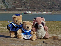 Sea bears. 3 little bears at the river Royalty Free Stock Photos