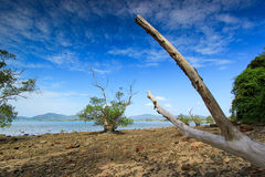 Sea. Beautiful mangrove forest in Phuket Stock Photography