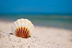 Shell white brown lies on the sand on a background of blue sea and blue sky summer vacation Stock Image