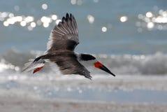 Sea bird Royalty Free Stock Photos