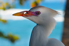 Sea bird Royalty Free Stock Image