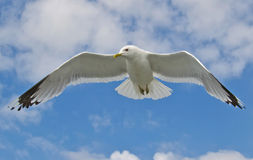 Sea Bird Stock Images