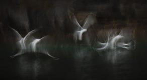 Sea Bird Abstract Stock Image
