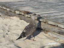 Sea bird. On the beach stock images
