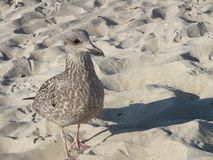 Sea bird. On beach sand stock images