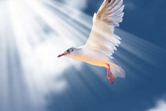 Sea bird on blue sky Royalty Free Stock Photo