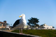 Sea Bird on California Coast stock photos
