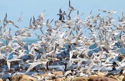 Sea Bird Chaos Royalty Free Stock Photos