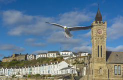 Sea bird flying over Porthlevan fishing port. And clock tower at  lizard Cornwall Stock Images
