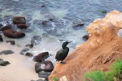 Sea Bird. An sea bird found observing the ocean Stock Photo
