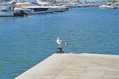 Sea Bird In A Marina stock photos
